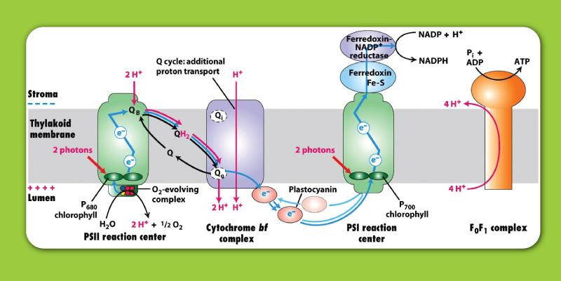 bioreaction-05